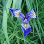 gallery-n-flower